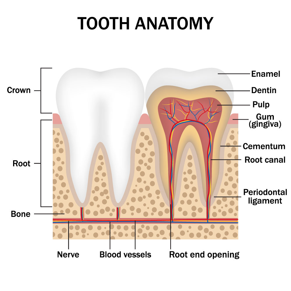 root canal therapy boise id smiles on state street